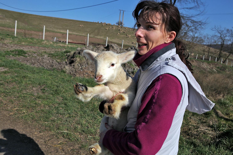 Bárányok előzősávon