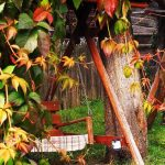 kaposzta kert 16416